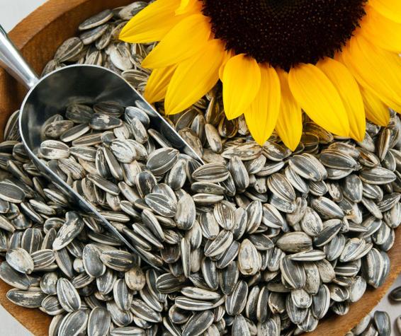 sunflower-seeds.jpg